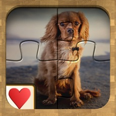Activities of Jigsaw Solitaire Dogs