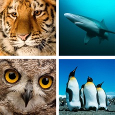 Activities of Animal Quiz Close Up : Guess the Word Trivia Games