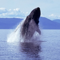 Humpback Whale Sounds!