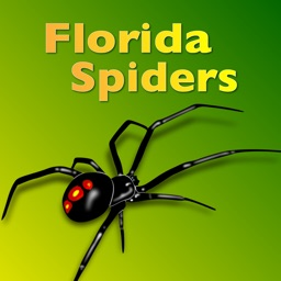 Florida Spiders - Guide to Common Species