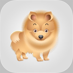 Pure Breed Dogs - Chow Grooming & Foster Guidance