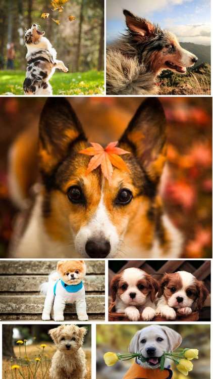 Dog Wallpapers - Home Screen Themes & Backgrounds screenshot-3
