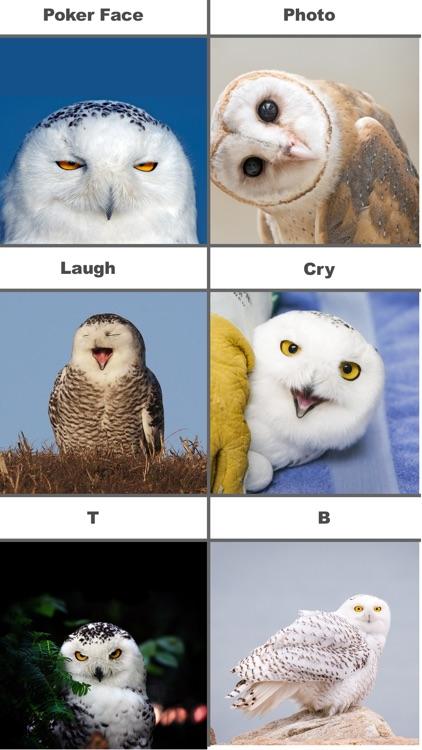 Owl Meme Stickers