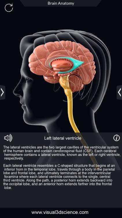 My Brain Anatomy screenshot-3