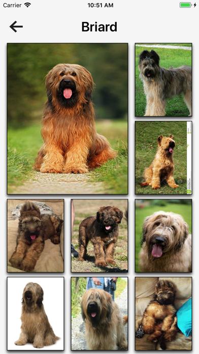Dog Breeds Hd Wallpapers review screenshots