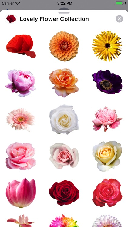 Lovely Flower Collection