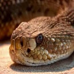 Real Snake Sounds