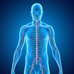 Nervous System Medical Terms