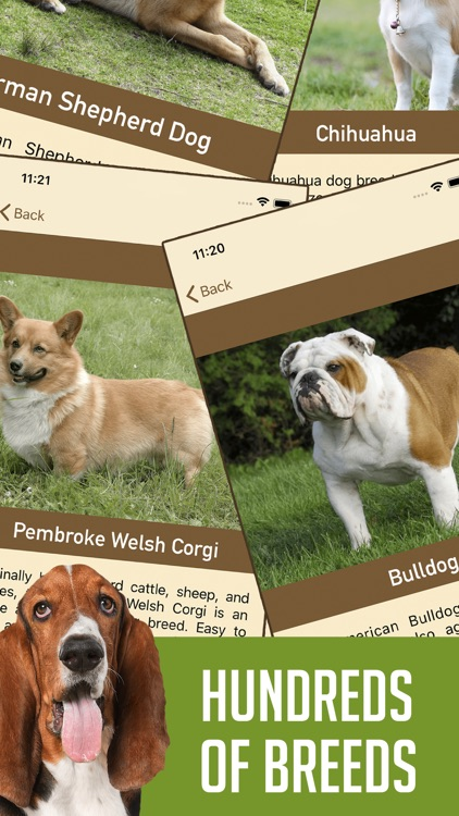 DogSnap - Dog Breed Identifier
