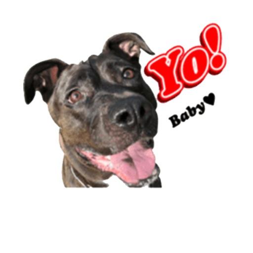 PitBull Stickers & Cute Emojis