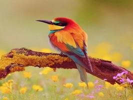 Amazing Birds Gallery