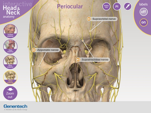3D Facial Anatomy Tool on the App Store
