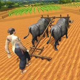 Village Farmers Plowing Harves