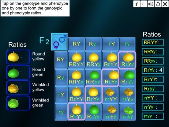 Dihybrid cross screenshot 19
