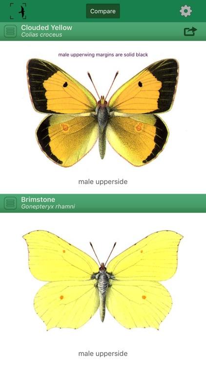 British & Irish Butterflies