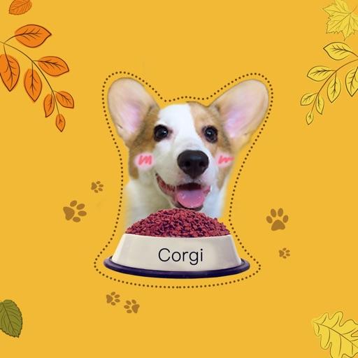 Cute Little Corgi