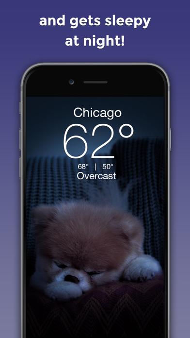 Boo Weather: Pomeranian Puppyのおすすめ画像3