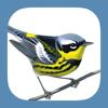 Sibley Birds 2nd Edition - mydigitalearth.com Cover Art