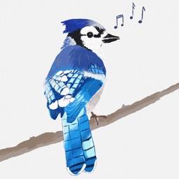 BirdSong ID (USA)