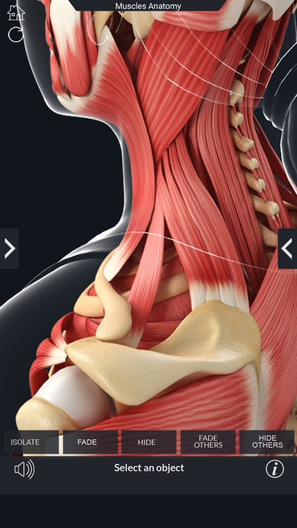 My Muscle Anatomy screenshot-5