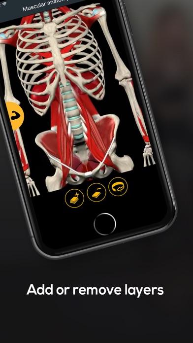 Anatomy by Muscle & Motionのおすすめ画像7