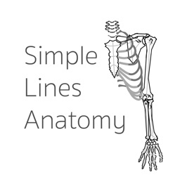 Simple Lines Anatomy