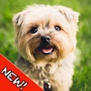 Cute Dogs Memory Match Game