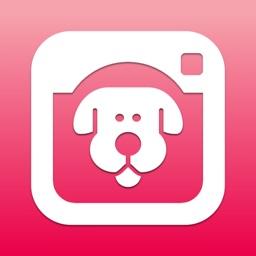 DogCam - Dog Selfie Camera