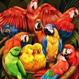 Parrots Card Game