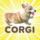 Fluffy cute Corgi Stickers