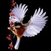 Songbirds 2.0