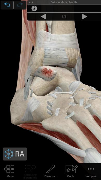 Muscles & Kinésiologie