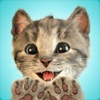 可愛い子猫とお友達