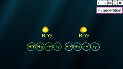 Dihybrid cross screenshot 5