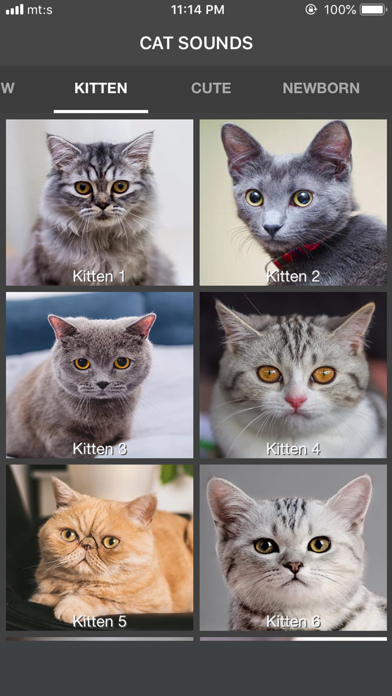 Cat Sounds - ColecciónCaptura de pantalla de2