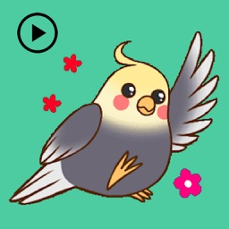 Animated Lovely Cockatiel Bird