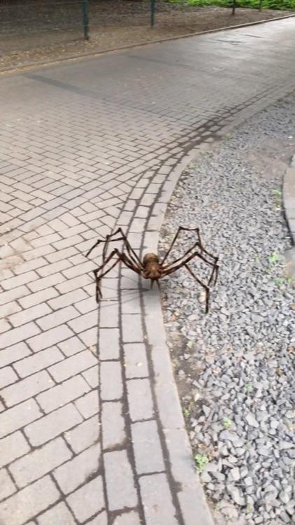 AR Spiders screenshot-1