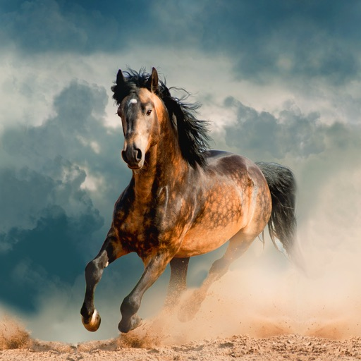 Horse Wallpapers Backgrounds App For Iphone Free