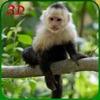 猴子模拟器野生动物动物