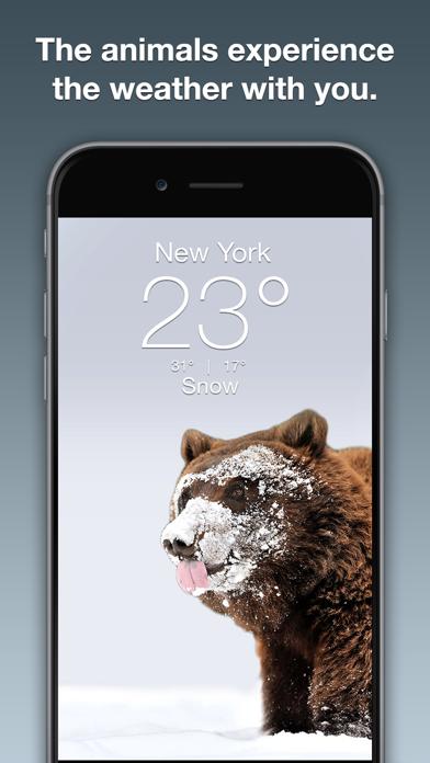 Wildlife Wallpaper Weatherのおすすめ画像2