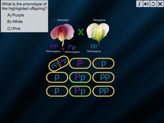 Test Cross: pea flower screenshot 13