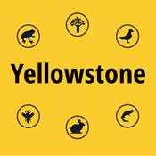 Yellowstone NP Field Guide