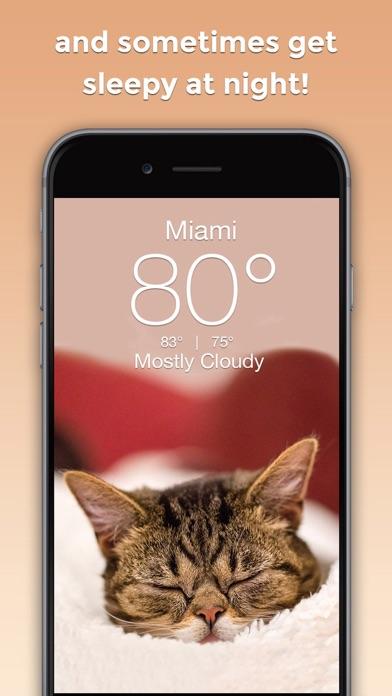 Lil BUB Cat Weather Reportのおすすめ画像3