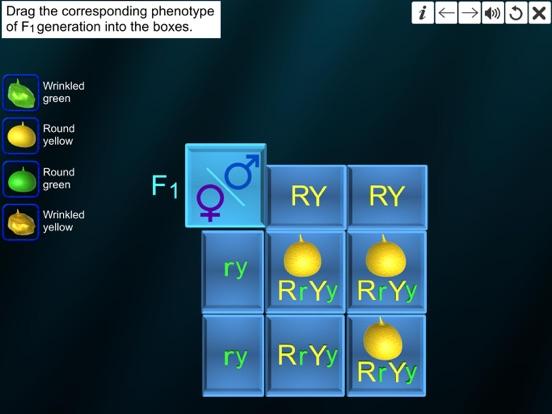 Dihybrid cross screenshot 14