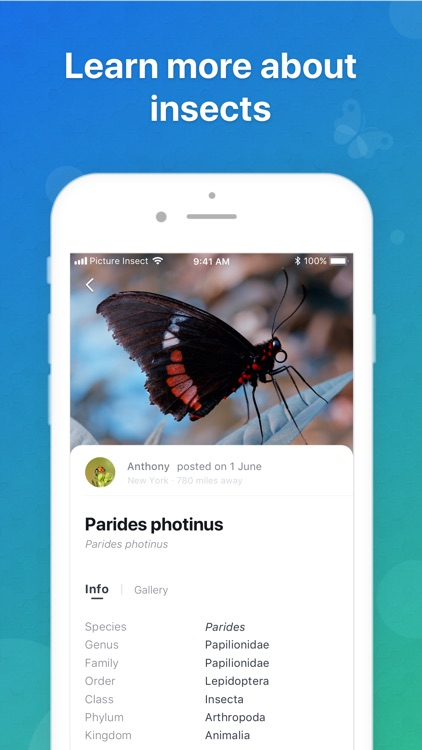 Picture Insect - Insect Id Pro