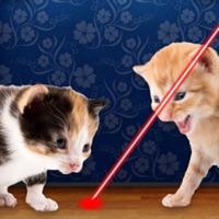 Codes for Laser Pointer for Cat Hack