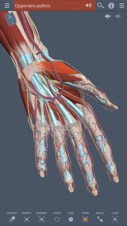 Forearm & Hand: 3D Real-time