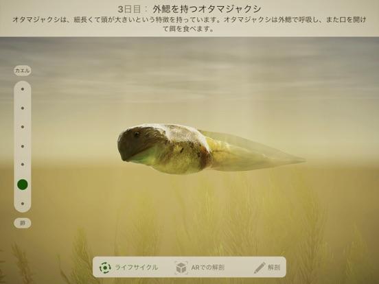 Froggipediaのおすすめ画像1