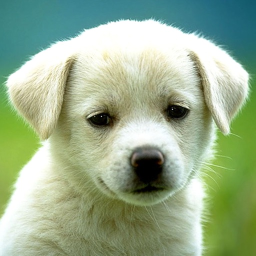 Dog Breeds HD Wallpapers