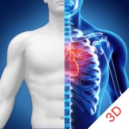 人体解剖学-骨骼和肌肉-生物学考试必备